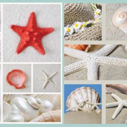 Canvas Print - Starfish & Shell Collage B (Set of 2)